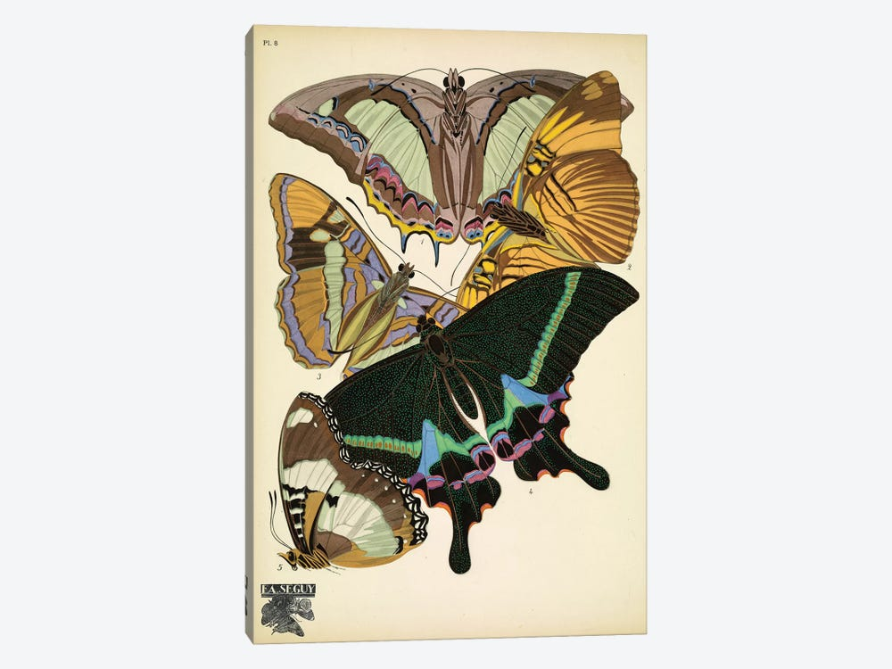Papillons (Butterflies) VIII by Eugène Séguy 1-piece Canvas Art