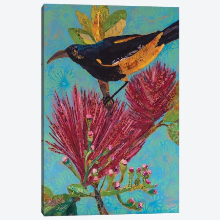 Hawaiian Bird III Canvas Print #ESH25} by Elizabeth St. Hilaire Canvas Art Print