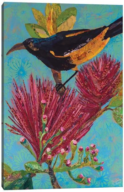 Hawaiian Bird III Canvas Art Print