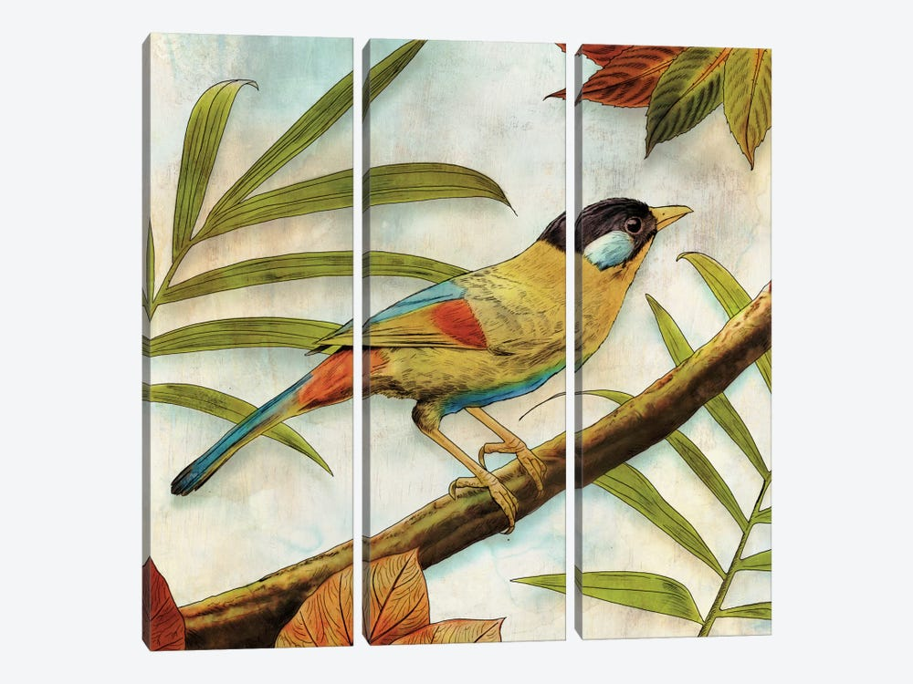 Jungle Bird I by Edward Selkirk 3-piece Canvas Artwork