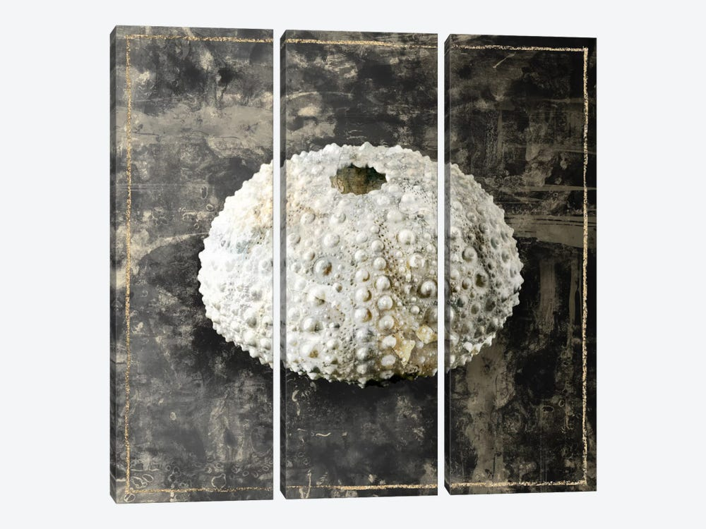 Marble Shell Series I 3-piece Canvas Art Print