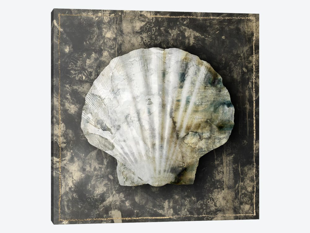 Marble Shell Series IV by Edward Selkirk 1-piece Canvas Wall Art