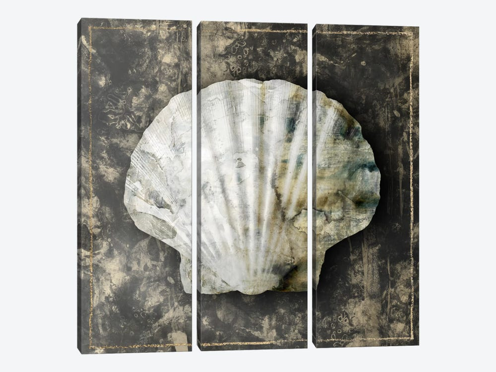 Marble Shell Series IV by Edward Selkirk 3-piece Canvas Wall Art