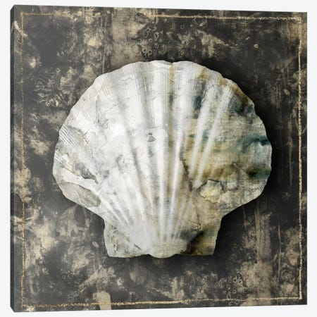 Marble Shell Series IV Canvas Print #ESK154} by Edward Selkirk Canvas Artwork