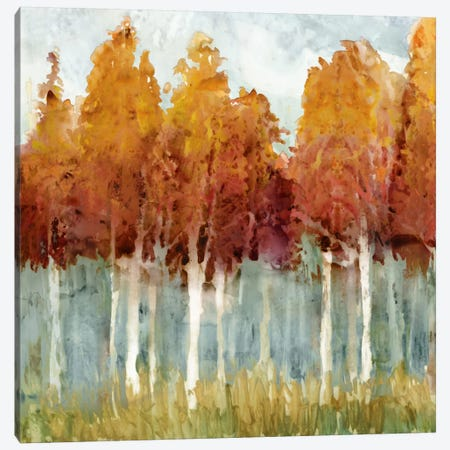 Birch II Canvas Print #ESK16} by Edward Selkirk Canvas Print