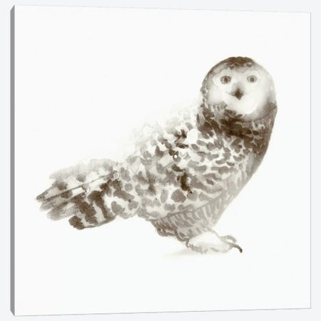 Owl Canvas Print #ESK197} by Edward Selkirk Canvas Wall Art