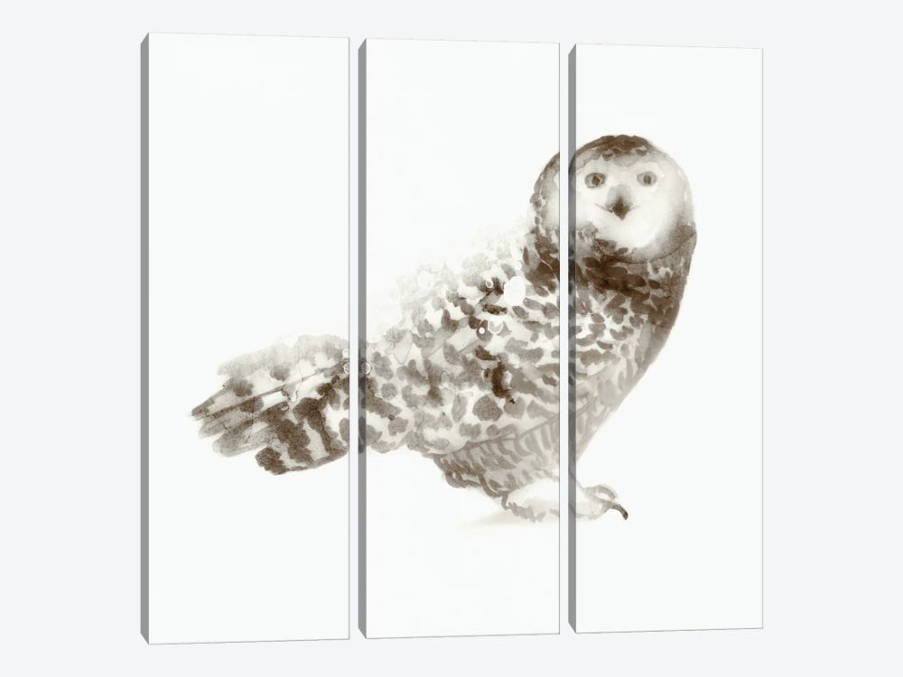 Owl by Edward Selkirk 3-piece Art Print