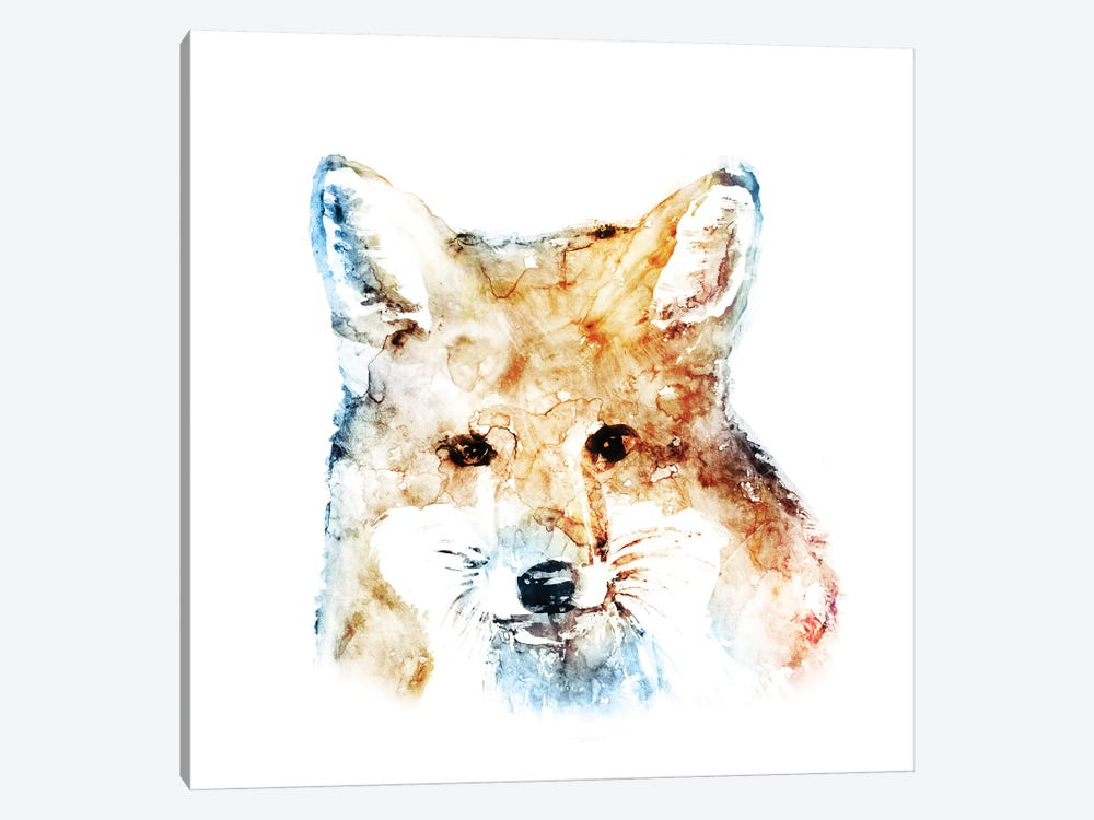 Watercolour Fox by Edward Selkirk 1-piece Canvas Print