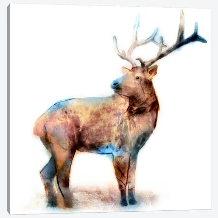 Elk Canvas Print #ESK64} by Edward Selkirk Canvas Artwork