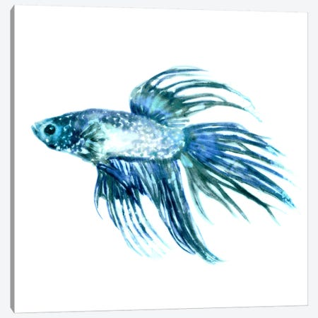 Fish IV Canvas Print #ESK72} by Edward Selkirk Canvas Art
