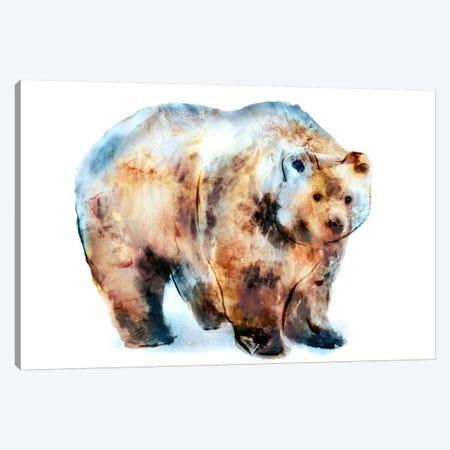 Bear II Canvas Print #ESK7} by Edward Selkirk Canvas Wall Art