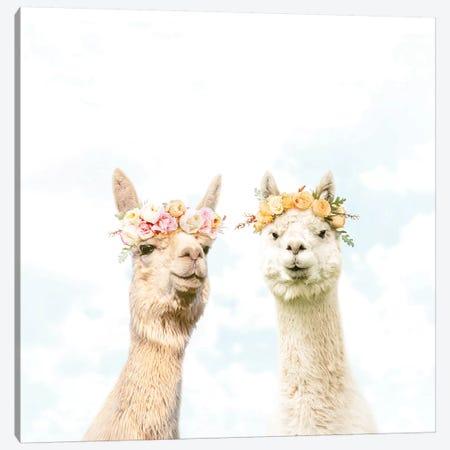 Alpacas In Bloom Canvas Print #ESM2} by Erin Summer Canvas Print
