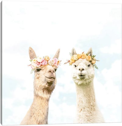 Alpacas In Bloom Canvas Art Print