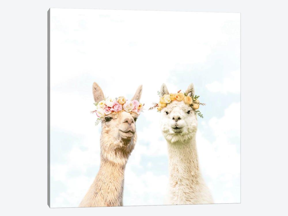 Alpacas In Bloom by Erin Summer 1-piece Canvas Art Print
