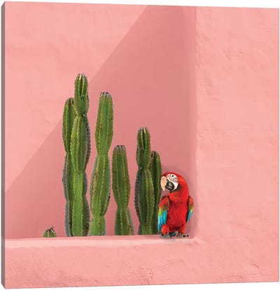 Macaw On Coral Canvas Art Print