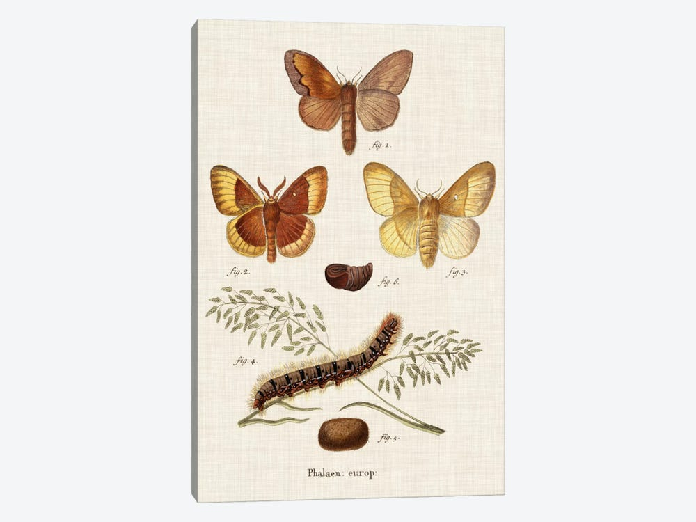 Life Cycle of a Moth I by Johann Esper 1-piece Art Print