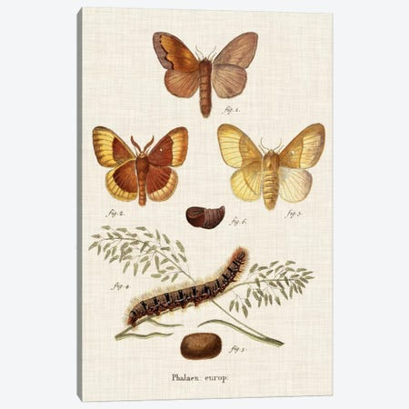 Life Cycle of a Moth I 3-Piece Canvas #ESP1} by Johann Esper Canvas Art Print