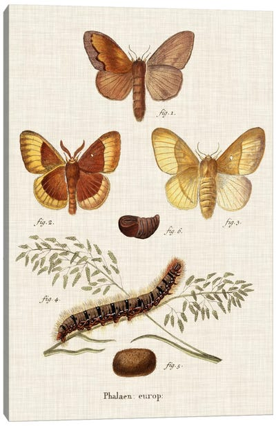 Life Cycle of a Moth I Canvas Art Print
