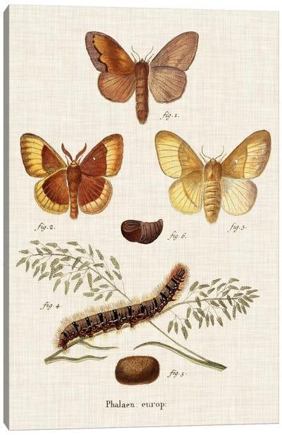 Life Cycle of a Moth I Canvas Art Print