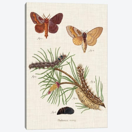 Life Cycle of a Moth II 3-Piece Canvas #ESP2} by Johann Esper Canvas Print