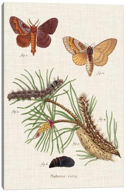 Life Cycle of a Moth II Canvas Art Print
