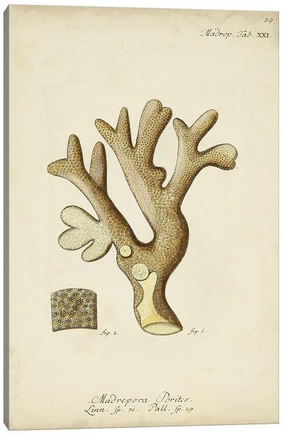 Ecru Coral II Canvas Art Print