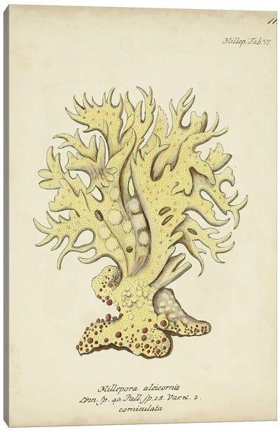 Ecru Coral IX Canvas Art Print