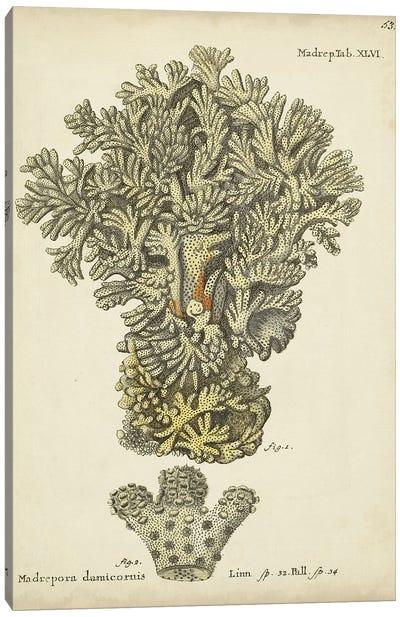 Ecru Coral VI Canvas Art Print