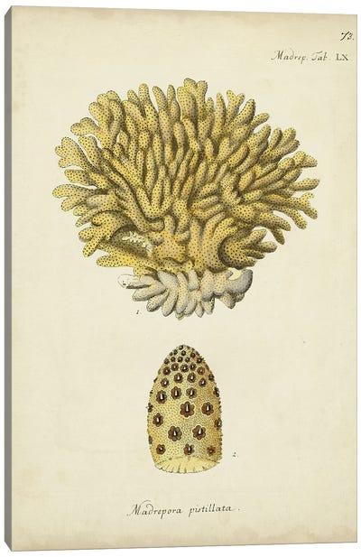Ecru Coral VIII Canvas Art Print