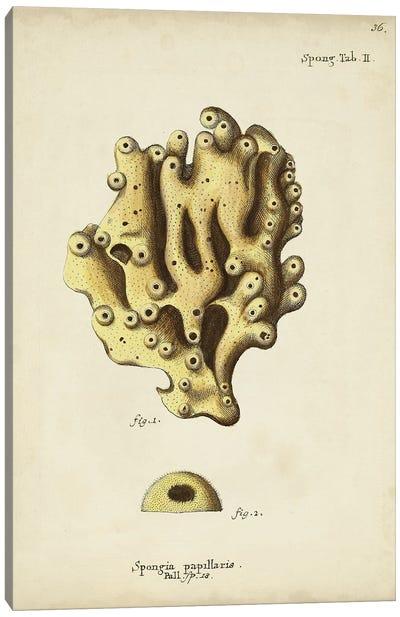 Ecru Coral X Canvas Art Print