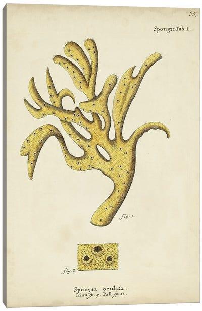 Ecru Coral XII Canvas Art Print