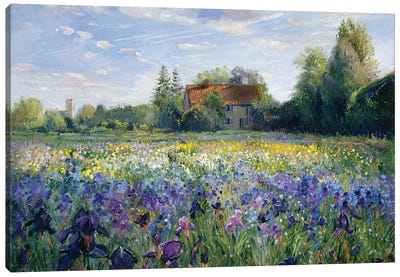 Evening At The Iris Field Canvas Art Print