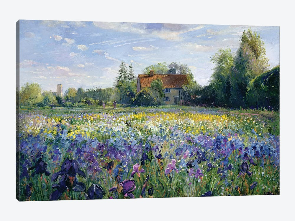 Evening At The Iris Field by Timothy Easton 1-piece Canvas Print