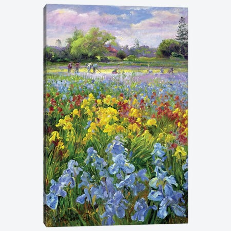 Hoeing Team And Iris Fields Canvas Print #EST11} by Timothy Easton Canvas Print
