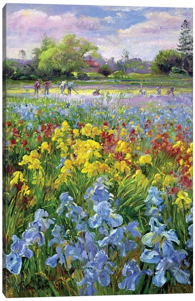 Hoeing Team And Iris Fields Canvas Art Print