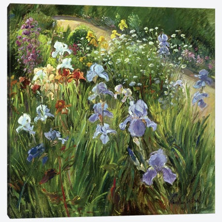 Irises And Oxeye Daisies Canvas Print #EST12} by Timothy Easton Art Print