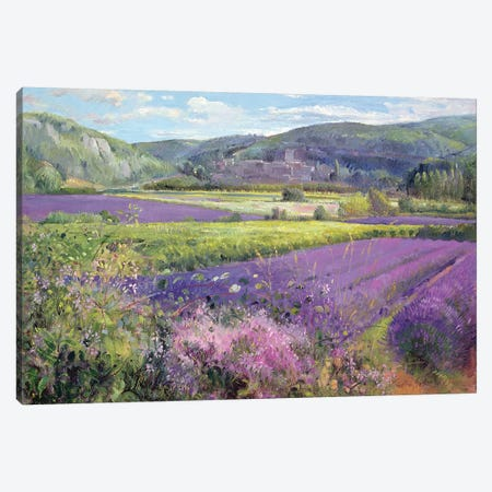 Lavender Fields In Old Provence Canvas Print #EST14} by Timothy Easton Canvas Art