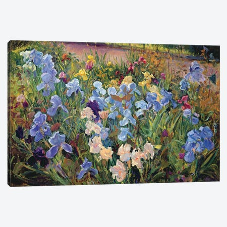 The Iris Bed Canvas Print #EST25} by Timothy Easton Art Print