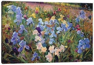 The Iris Bed, 1993 Canvas Art Print
