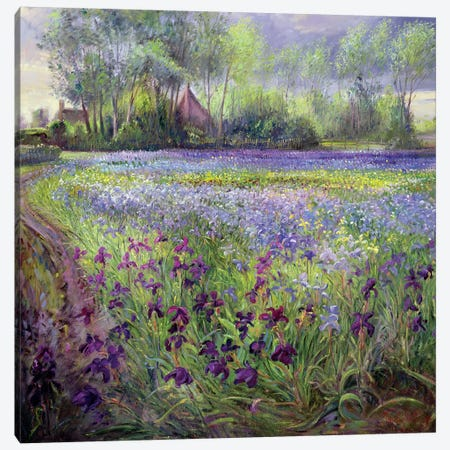 Trackway Past The Iris Field, 1991 Canvas Print #EST28} by Timothy Easton Canvas Artwork