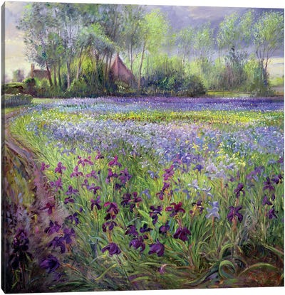 Trackway Past The Iris Field Canvas Art Print