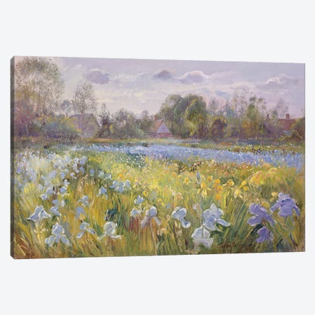 Iris Field In The Evening Light, 1993 Canvas Print #EST38} by Timothy Easton Canvas Art Print