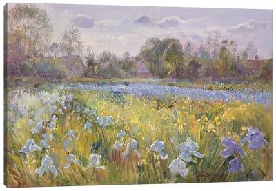 Iris Field In The Evening Light, 1993 Canvas Art Print