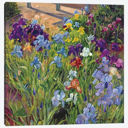 Irises And Summer House Shadows, 1996 Canvas Print #EST39} by Timothy Easton Canvas Print