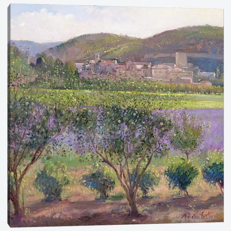 Lavender Seen Through Quince Trees, Monclus Canvas Print #EST40} by Timothy Easton Canvas Art