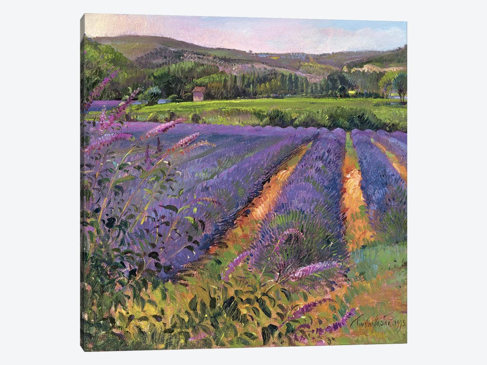 Buddleia And Lavender Field, Montclus by Timothy Easton 1-piece Canvas Wall Art