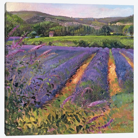 Buddleia And Lavender Field, Montclus, 1993 Canvas Print #EST6} by Timothy Easton Canvas Wall Art