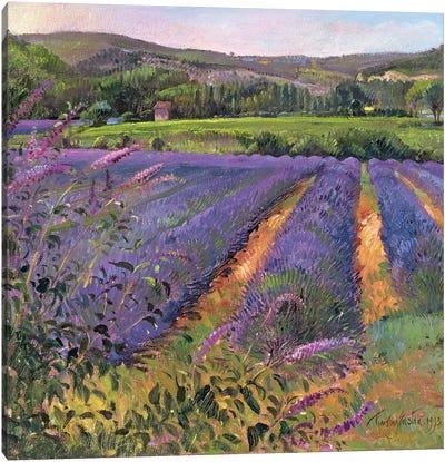 Buddleia And Lavender Field, Montclus, 1993 Canvas Art Print