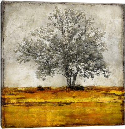Majestic - Amber Canvas Art Print