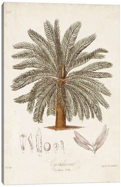 Antique Tropical Palm I Canvas Art Print